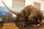 Jednorohý nosorožec (Elasmotherium sibiricum) 001