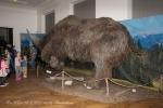 Jednorohý nosorožec (Elasmotherium sibiricum) 003
