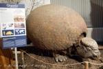Pásovec (Glyptodon)