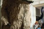 Pozemní lenochod (Megatherium americanum)