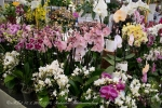 2017_03_11 Medzinárodná výstava orchideí 001