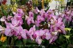 2017_03_11 Medzinárodná výstava orchideí 003