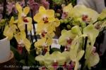 2017_03_11 Medzinárodná výstava orchideí 004