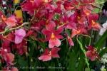 2017_03_11 Medzinárodná výstava orchideí 006