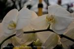 2017_03_11 Medzinárodná výstava orchideí 015