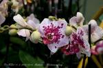 2017_03_11 Medzinárodná výstava orchideí 016
