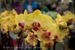 2017_03_11 Medzinárodná výstava orchideí 019