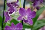 2017_03_11 Medzinárodná výstava orchideí 023