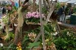 2017_03_11 Medzinárodná výstava orchideí 025