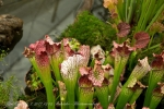 2017_03_11 Medzinárodná výstava orchideí 028
