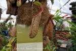 2017_03_11 Medzinárodná výstava orchideí 034