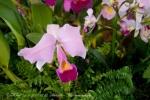 2017_03_11 Medzinárodná výstava orchideí 039