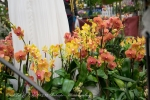 2017_03_11 Medzinárodná výstava orchideí 067