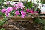 2017_03_11 Medzinárodná výstava orchideí 068
