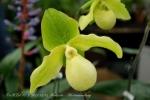 2017_03_11 Medzinárodná výstava orchideí 074