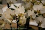 2017_03_11 Medzinárodná výstava orchideí 075