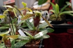2017_03_11 Medzinárodná výstava orchideí 076