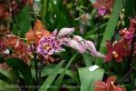 2017_03_11 Medzinárodná výstava orchideí 079
