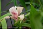 2017_03_11 Medzinárodná výstava orchideí 083