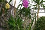 2017_03_11 Medzinárodná výstava orchideí 091