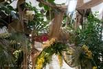 2017_03_11 Medzinárodná výstava orchideí 092