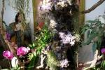 2017_03_11 Medzinárodná výstava orchideí 097