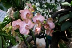 2017_03_11 Medzinárodná výstava orchideí 101