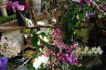 2017_03_11 Medzinárodná výstava orchideí 116