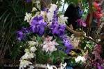 2017_03_11 Medzinárodná výstava orchideí 117