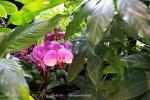 2017_03_11 Medzinárodná výstava orchideí 127