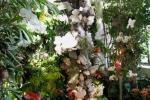 2017_03_11 Medzinárodná výstava orchideí 128