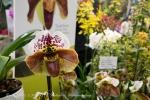 2017_03_11 Medzinárodná výstava orchideí 140
