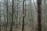 2015.11.22 Z Alinovho lesa 002
