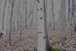 2015.11.22 Z Alinovho lesa 019